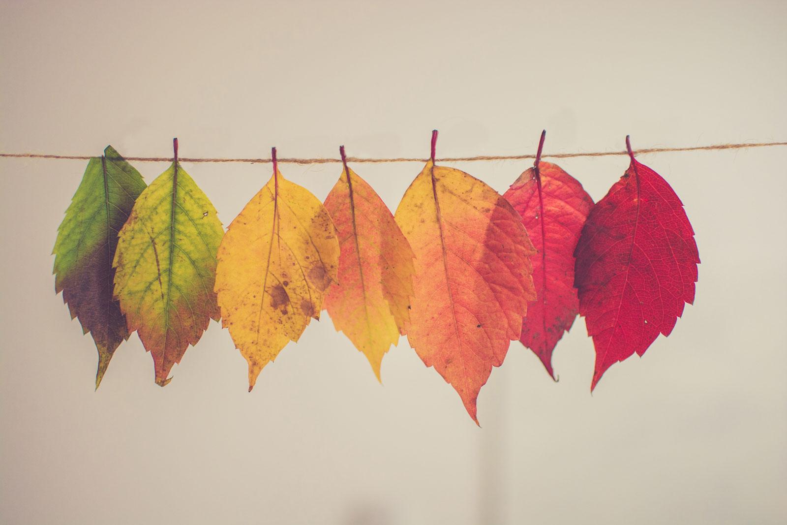 Hojas de colores (imagen enlazada a sí misma)