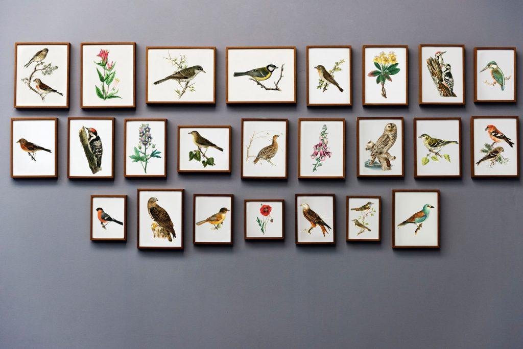 Cuadros de pájaros