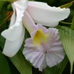Más flores de Madeira