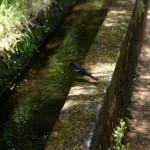 Levada o canal de irrigación de Madeira
